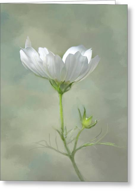 Greeting Card featuring the photograph Solo Cosmo by Ann Bridges