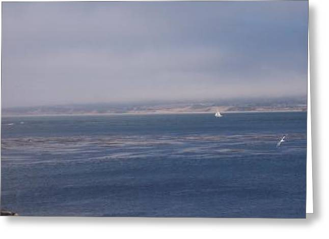 Solo Sail In Monterey Bay Greeting Card by Pharris Art