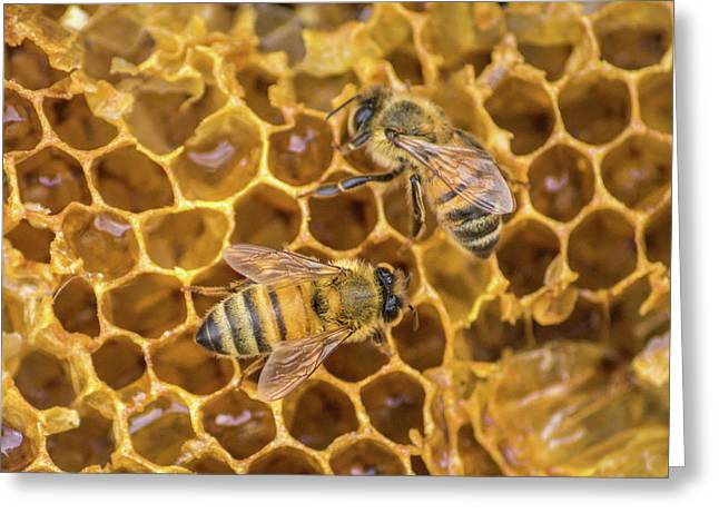 Greeting Card featuring the photograph Some Of Your Beeswax by Bill Pevlor