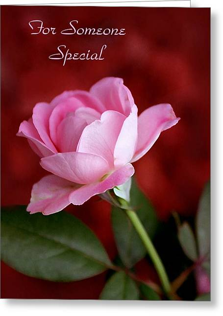Someone special rose card photograph by jim darnall greeting card m4hsunfo