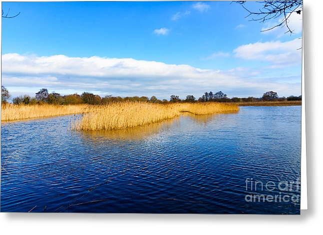 Somerset Levels Greeting Card