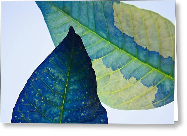 Recently Sold -  - Duo Tone Greeting Cards - Something Blue Greeting Card by Bobby Villapando
