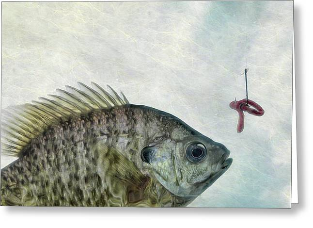 Greeting Card featuring the photograph Something Fishy by Mark Fuller