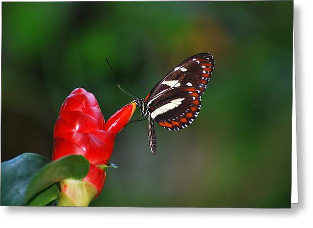 Greeting Card featuring the photograph Something Red by Teresa Blanton