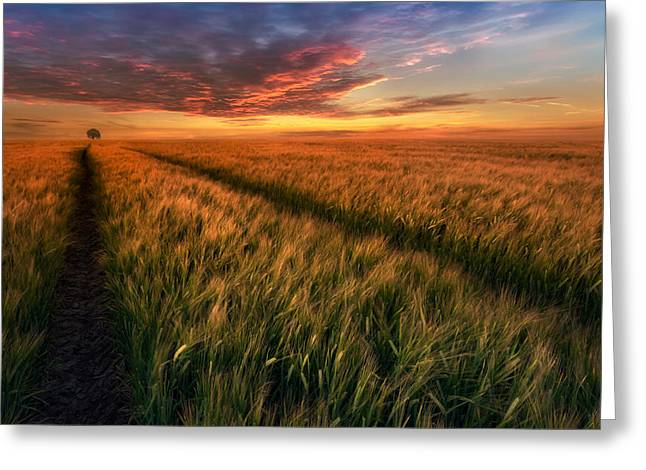 Somewhere At Sunset Greeting Card by Piotr Krol (bax)