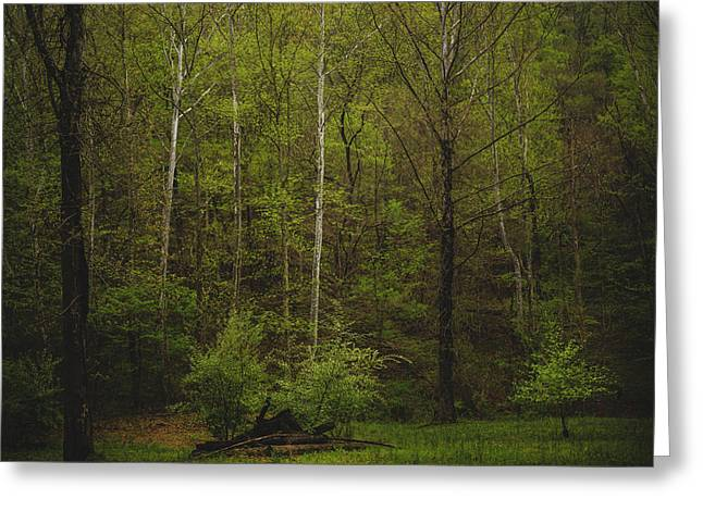 Greeting Card featuring the photograph Somewhere In The Woods by Shane Holsclaw