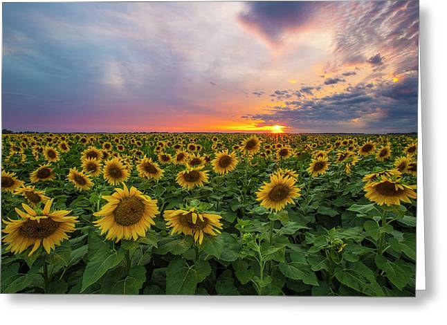 Somewhere Sunny  Greeting Card by Aaron J Groen
