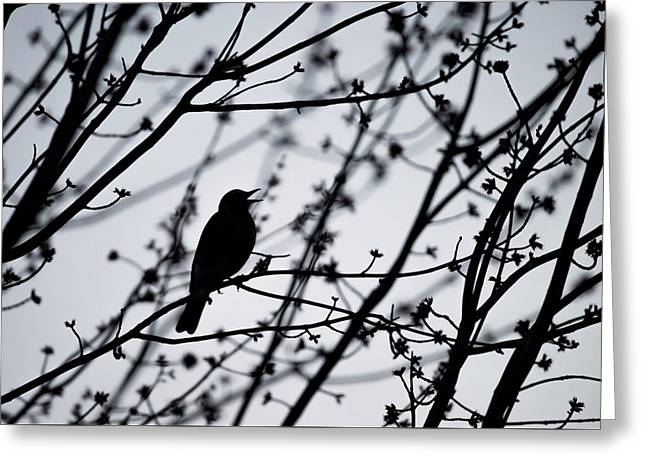 Greeting Card featuring the photograph Song Bird Silhouette by Terry DeLuco