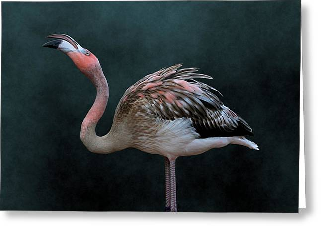 Song Of The Flamingo Greeting Card
