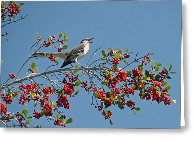 Greeting Card featuring the photograph Song Of The Mockingbird by Peg Urban