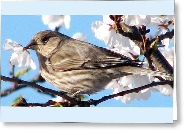 Song Sparrow Dining Out Greeting Card by Angela Davies