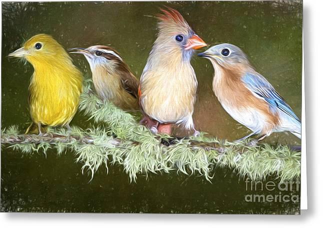 Songbird Quartet Greeting Card by Bonnie Barry