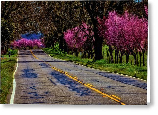 Sonoma Country Road Greeting Card by Garry Gay