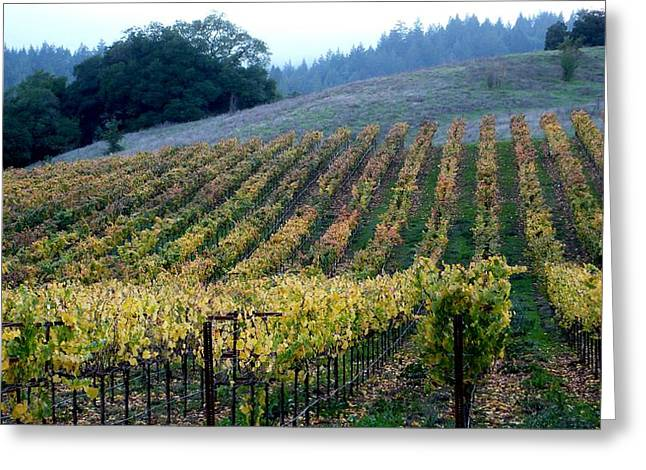 Sonoma County Vineyards Near Healdsburg Greeting Card