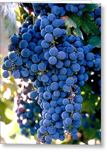 Sonoma Grapes Greeting Card by Bart Edson