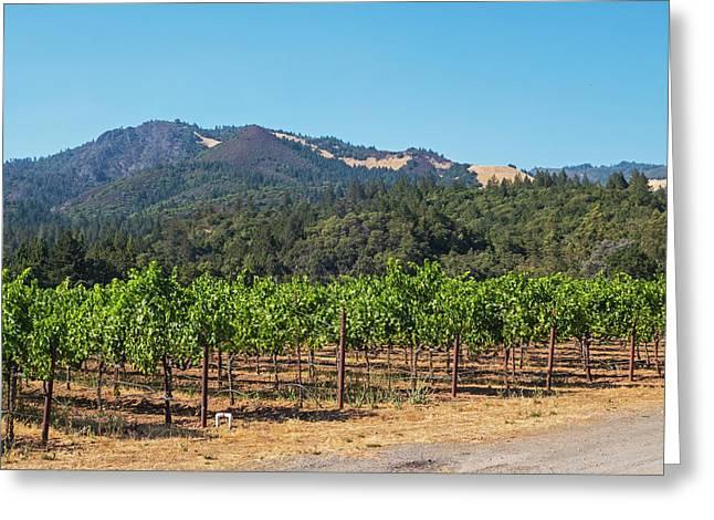 Sonoma Valley Vineyards Northern Ca Greeting Card