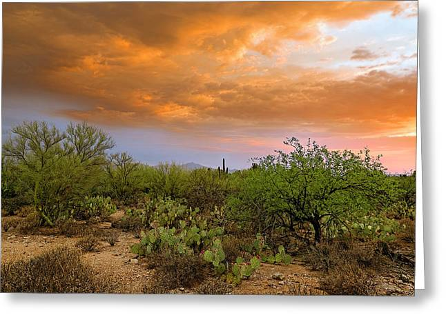 Greeting Card featuring the photograph Sonoran Desert H11 by Mark Myhaver