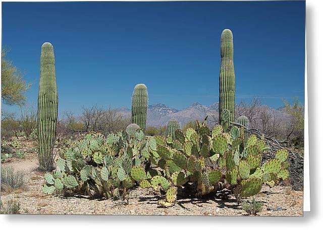 Sonoran Desert Greeting Card by Rich Leighton