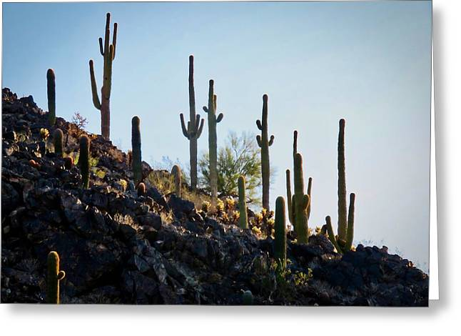 Sonoran Desert Saguaro Slope Greeting Card