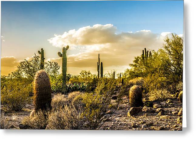 Sonoran Desert Sunset Panoramic Greeting Card by Chuck Brown