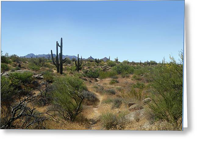 Sonoran Desert Trail Greeting Card