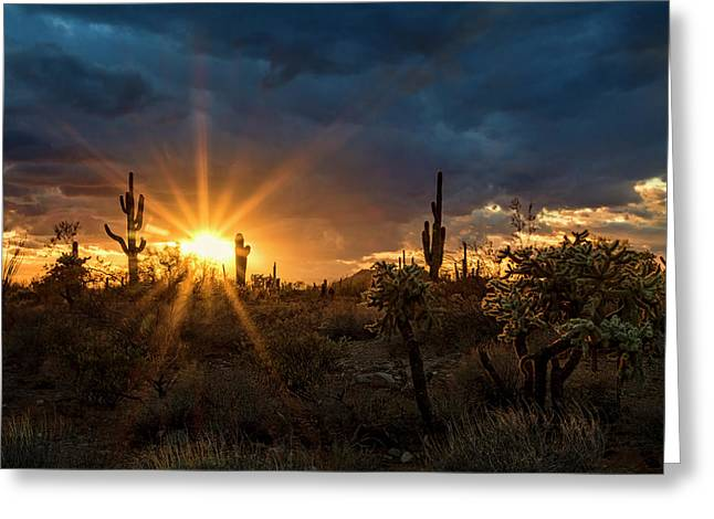 Greeting Card featuring the photograph Sonoran Gold At Sunset  by Saija Lehtonen