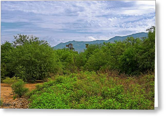 Greeting Card featuring the photograph Sonoran Greenery H30 by Mark Myhaver