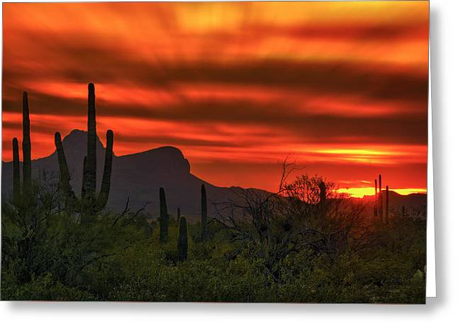 Greeting Card featuring the photograph Sonoran Sunset H38 by Mark Myhaver