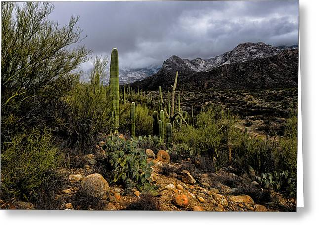 Greeting Card featuring the photograph Sonoran Winter No.1 by Mark Myhaver