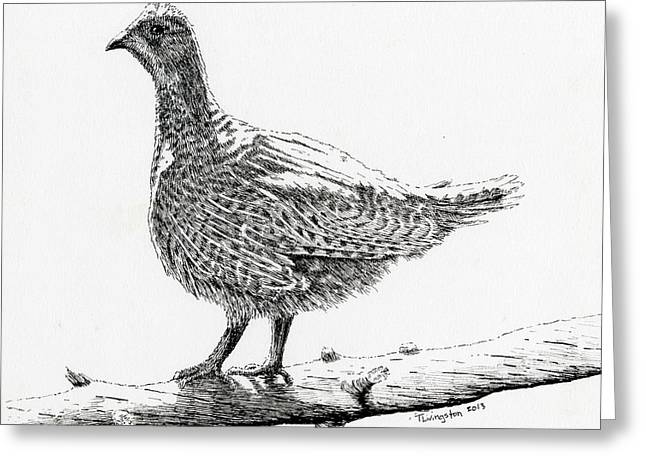 Sooty Grouse Greeting Card