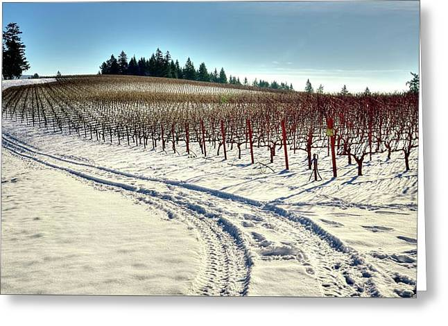 Soter Vineyard Winter Greeting Card by Jerry Sodorff