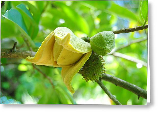 Soursop Greeting Card