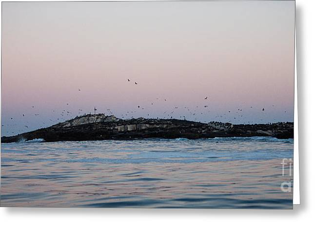 South African Fur Seal Colony Greeting Card by Gerard Lacz