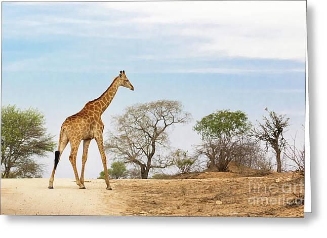 South African Giraffe Greeting Card