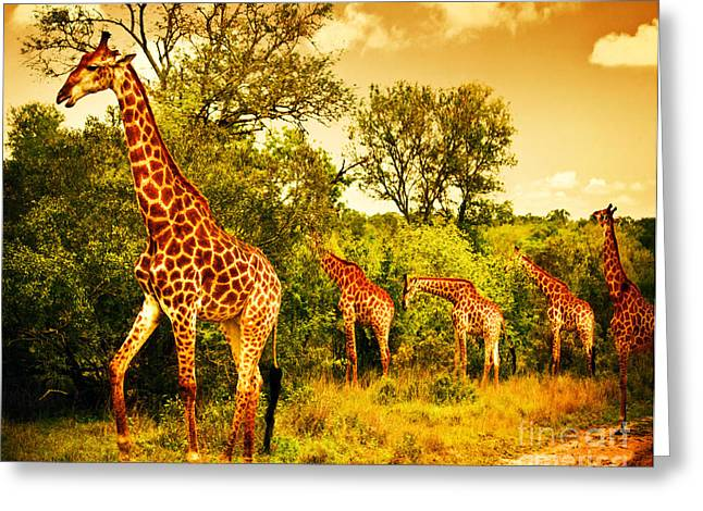 South African Giraffes Greeting Card