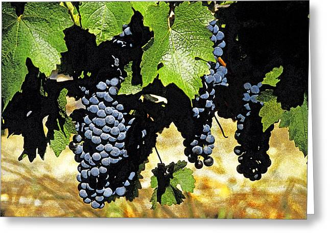 South African Vineyard Greeting Card by Dennis Cox