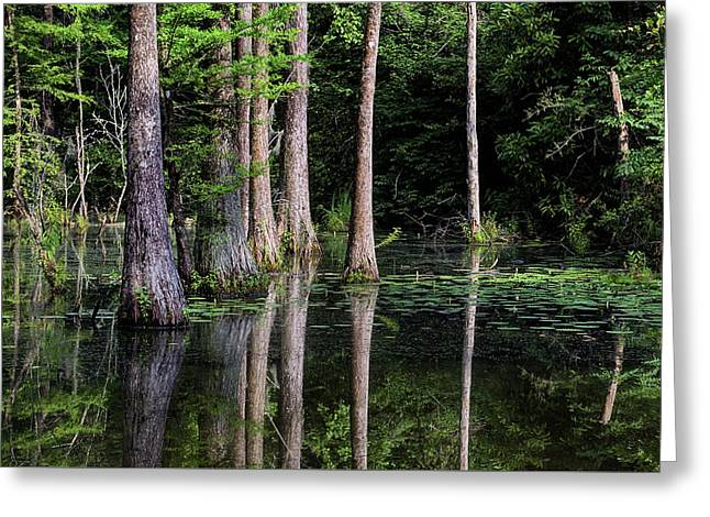 South Alabama Serenity Greeting Card by JC Findley