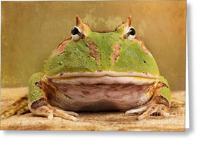 South American Horned Frog Greeting Card by Linda D Lester