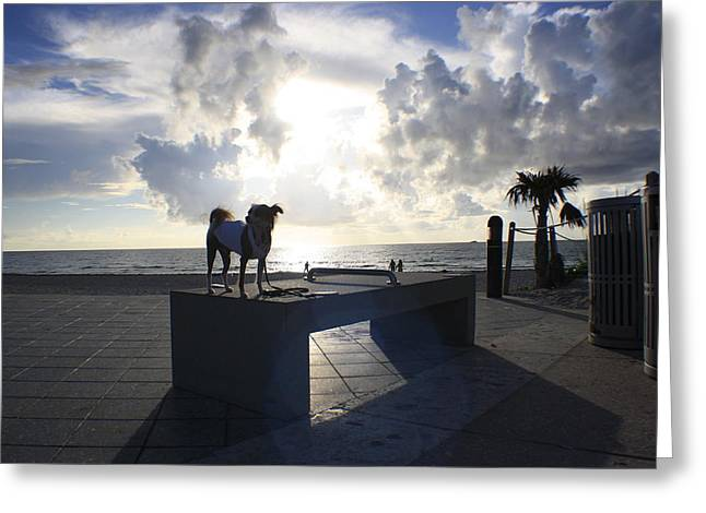 South Beach Dog Walk Greeting Card