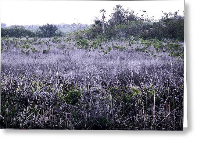 South Florida Marsh Magnificence Greeting Card by Charles Peck