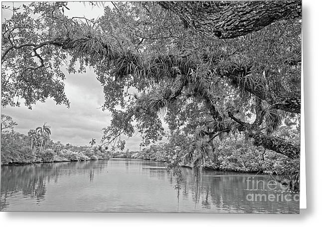 South Fork St. Lucie Greeting Card by Larry Nieland