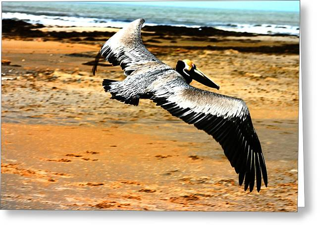 South Padre Pelican Greeting Card by Laurie Prentice