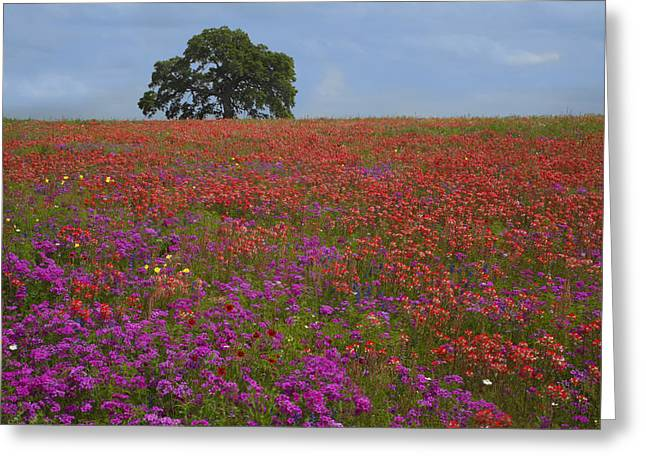 South Texas Bloom Greeting Card