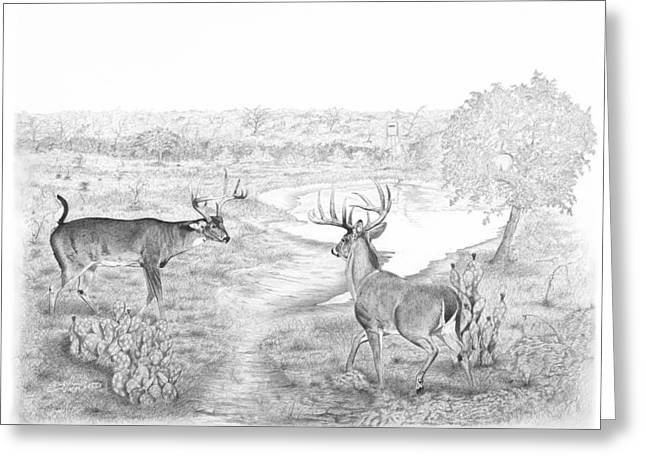 South Texas Stand Off Greeting Card by Steve Maynard