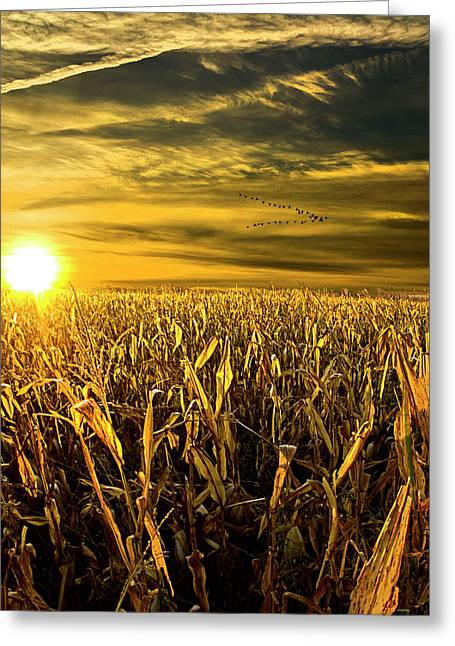 Southbound Greeting Card by Phil Koch
