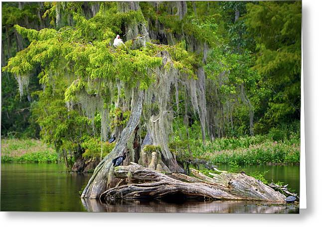 Southern Beauty Greeting Card by Bill Chambers