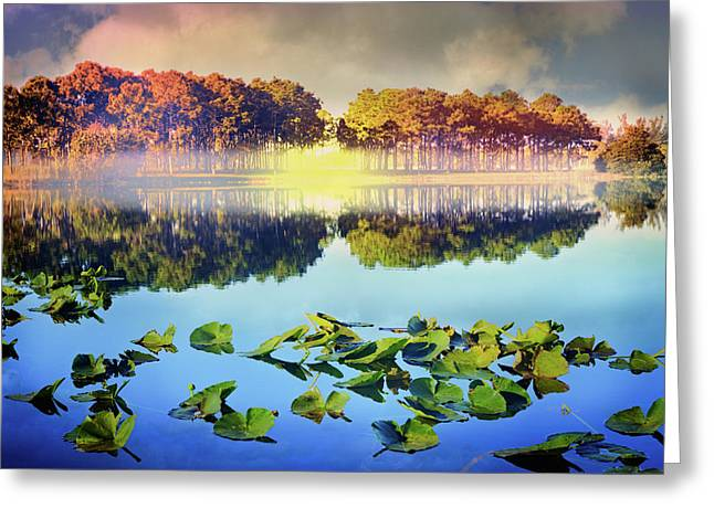Greeting Card featuring the photograph Southern Beauty by Debra and Dave Vanderlaan