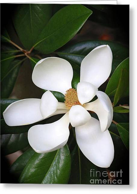 Southern Charm Magnolia Grandiflora Greeting Card