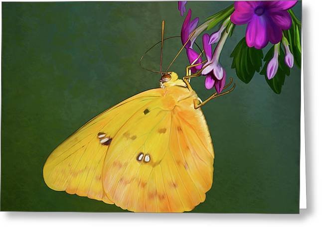 Southern Dogface Butterfly Greeting Card