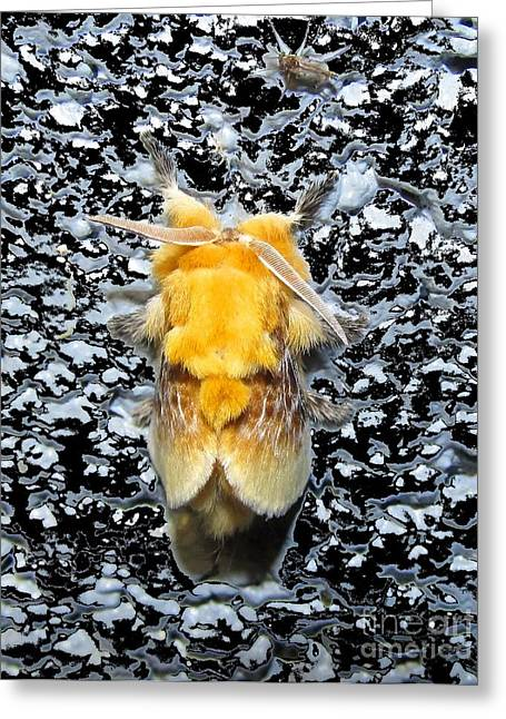 Southern Flannel Moth Greeting Card